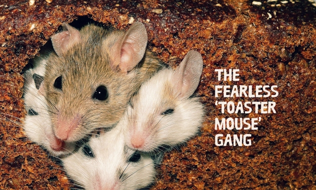 The Fearless Toaster Mouse Gang