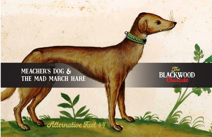 Meachers Dog