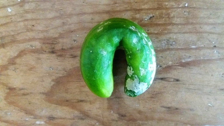 Cucumber Fail